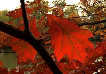 0107_leaves2