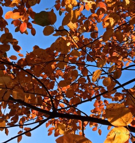 0108_leaves3