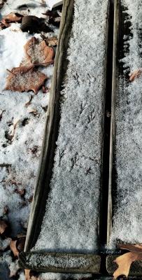 0133_winter's choreographyone
