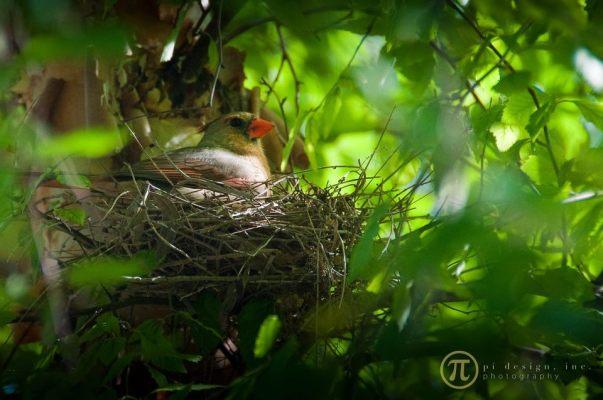 0166_birds
