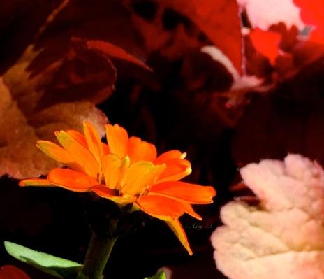 0169_sunlight through petals